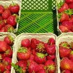 Obst aus der Region - Erdbeeren